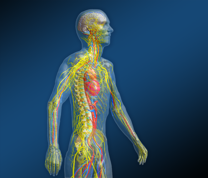 Itis Receives 5 Year Nih Award To Build An Integrated Simulation